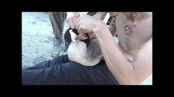 ► Rescuer Untangles Canada Goose From Fishing