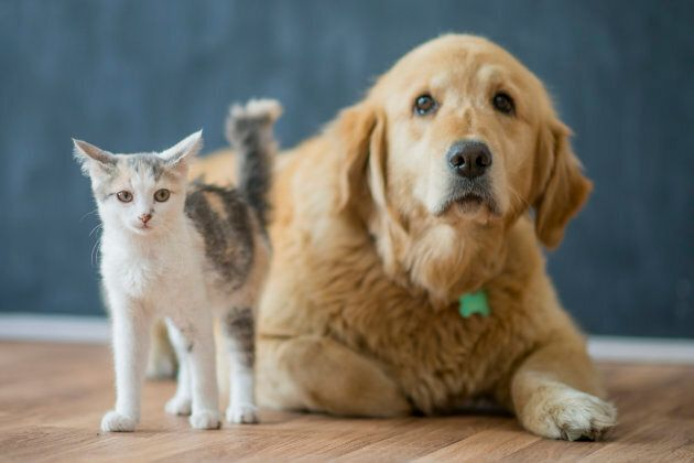 Vancouver pet stores will only be allowed to display animals for adoption from recognized