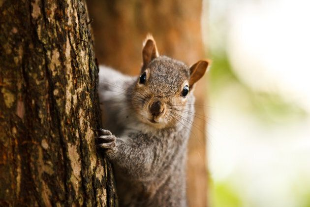 Worried about your neighbourhood squirrel? The hunt would take place outside of urban areas, Quebec hunt...