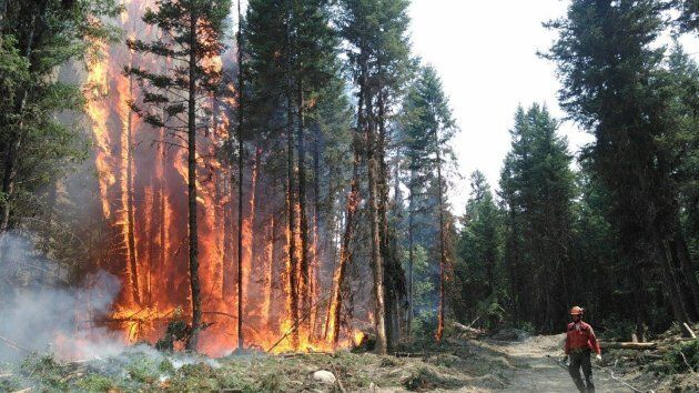 This photo was taken by a crew member fighting one of the numerous aggressive wildfires in the Cariboo...