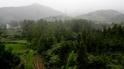 Forestry Company Defrauded Investors, Misled Investigators: