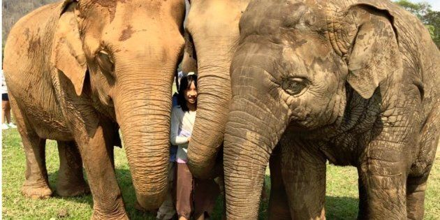Genie is part of this elephant herd in