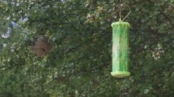 Loblaws Pulls Wasp Trap That Reportedly Killed 7