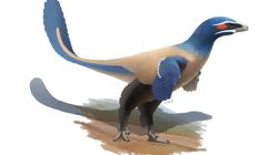 New Feathered Dinosaur Species Named After Canadian
