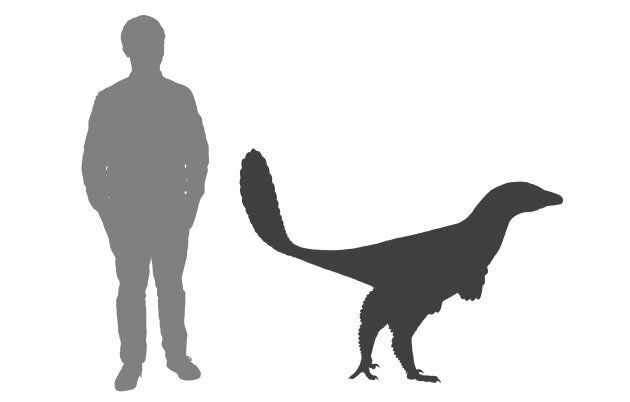 The Albertavenator weighed around 60kg and was about two metres long.