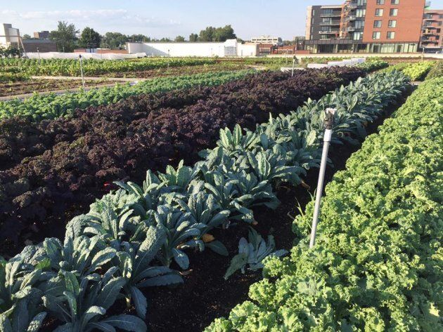 The rooftop garden at IGA Famille Duchemin in St. Laurent, Quebec, is pictured in this photo posted to...