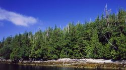 New B.C. Government A Chance For Better Forest
