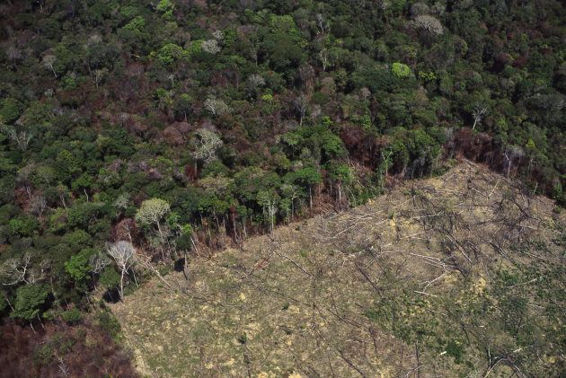 Amazon rainforest clearance for agriculture.