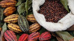 Chia, Cocoa, Seaweed And 3 Other Foods To Eat For Better