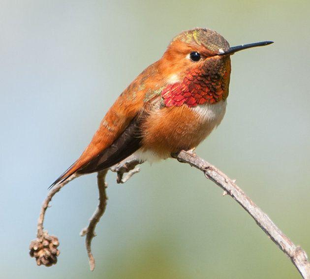 Hooray For Hummingbirds: Celebrating National Hummingbird