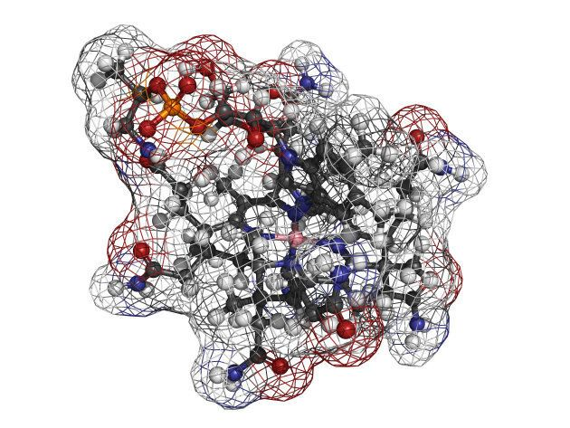 A molecular model of Vitamin B12, or cyanocobalamin.