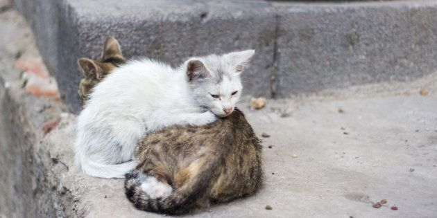 More Severed Cat Body Parts Found In Kitchener: