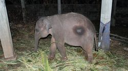 The Sri Lankan Baby Elephants