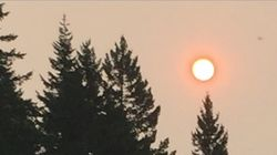 Choking On Denial: Forest Fires And Climate
