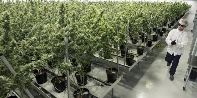 Tweed employee Ryan Harris works inside the flowering room at Tweed Inc. in Smith Falls, Ontario, on December 5, 2016. The facility is owned by Canopy Growth, Canada's largest medical marijuana producer.