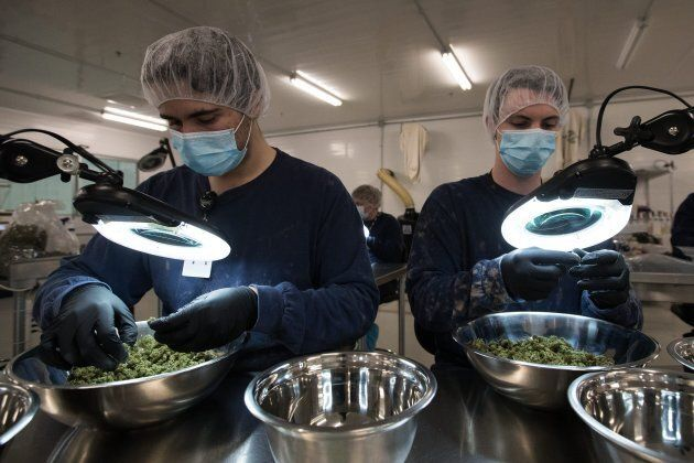 Employees look over medical marijuana buds at Tweed Inc. in Smith Falls, Ont., on Dec. 5, 2016. The facility is owned by Canopy Growth, Canada's largest medical marijuana company.