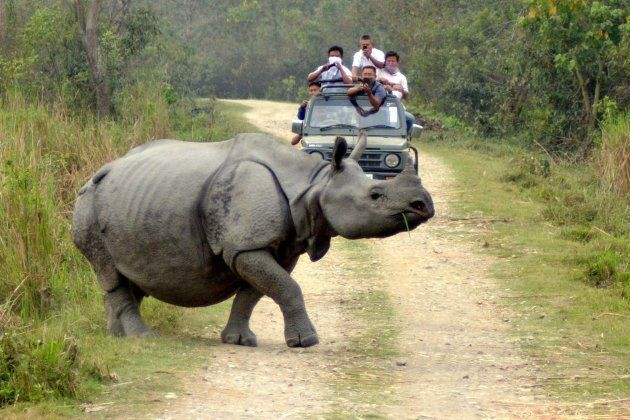 Tourists click pictures of a Rhino crossing a road during a Jeep Safari in Kaziranga National Park on...