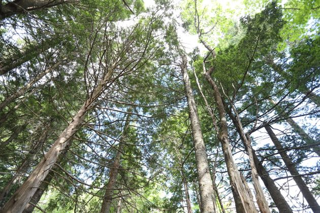 How Canadians Can Lead The World In Forest