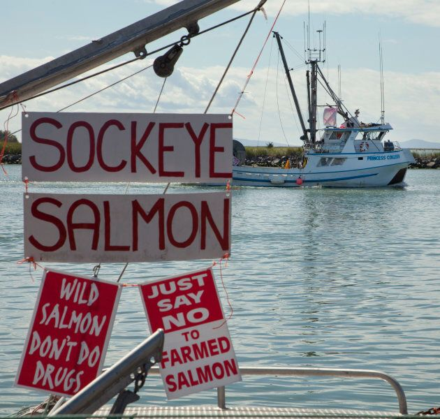 A fishing boat heads to the mouth of the Fraser River as signs hang from a docked boat in Steveston, B.C.