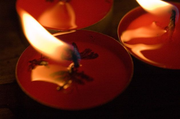 Geraniol candles are superior to citronella candles for repelling