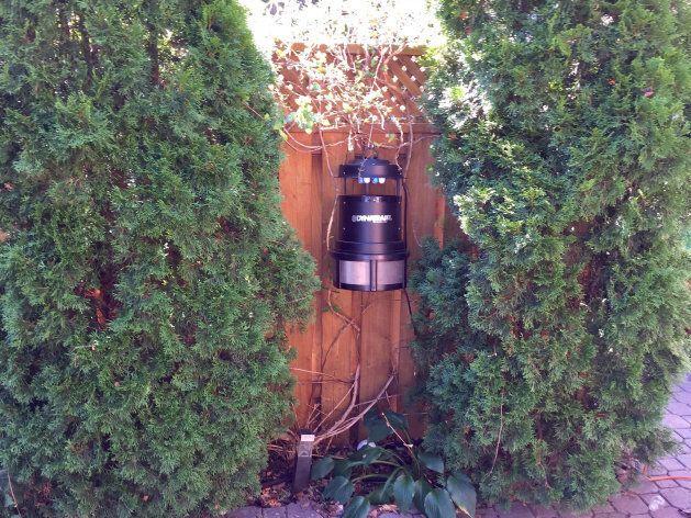 The Dynatrap hangs between the cedars in my backyard.