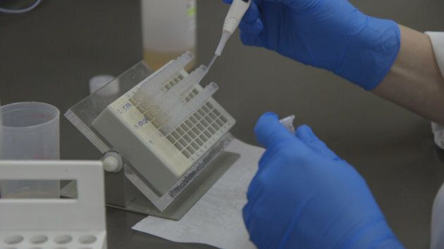 Testing for West Nile Virus at the Animal Health Centre in Abbotsford, BC.