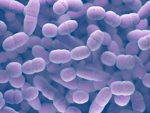 Streptococcus pneumoniae, or pneumococcus, is a gram-positive bacteria responsible for many types of pneumococcal infections.