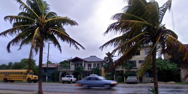 Palms blow in the heavy wind and rain from Tropical Storm Chantal, Aug. 21, 2001 in the town of Corozal,