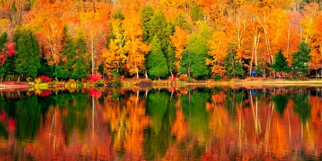 Forest of colorful autumn trees reflecting in calm