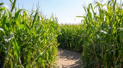 Mom Calls Police Morning After 3-Year-Old Left In Corn