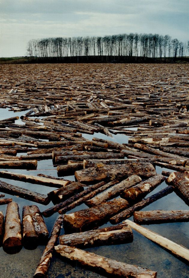 A log jam in Spruce Falls, Ont., destined for the mill in Kapuskasing.