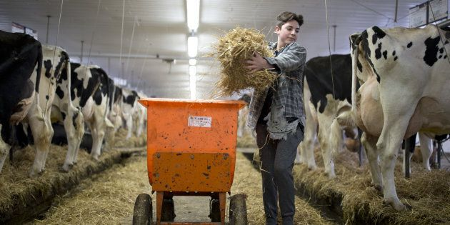 A farmer feeds cows at a dairy farm in Granby, Que., on April 22, 2017. The United States has made a...