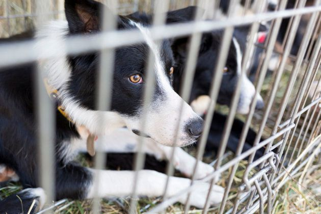 Shelter Animals Should Never End Up In Research