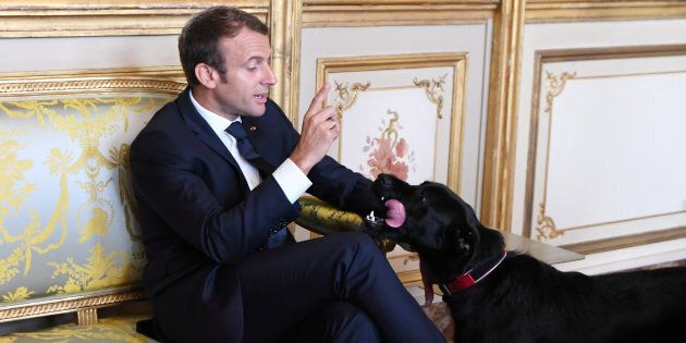 French president Emmanuel Macron gestures towards his dog Nemo during a meeting with German Vice Chancellor...