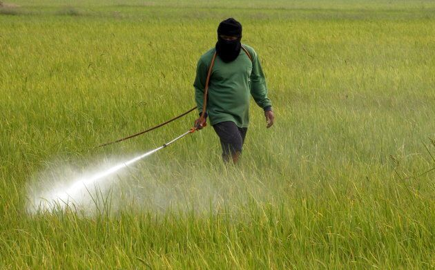 A farmer sprays pesticide over a rice field in Nakhonsawan province, north of Bangkok, Thailand, Feb....