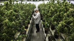 Alcohol Giant Buys Stake In Canadian Pot Firm, Plans Cannabis
