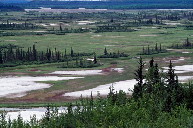 Wood Buffalo National Park in