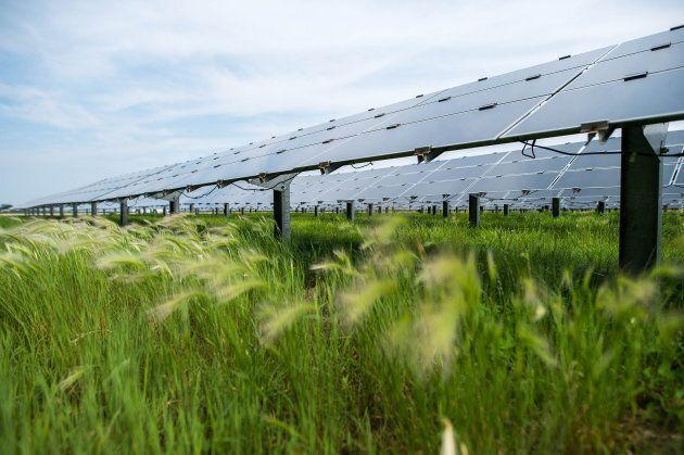 Solar panels stand at a solar farm in Sarnia,