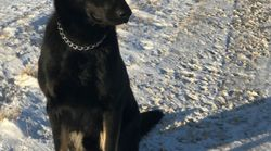 RCMP Dog Gets Lots Of Belly Rubs After Helping Save Frozen