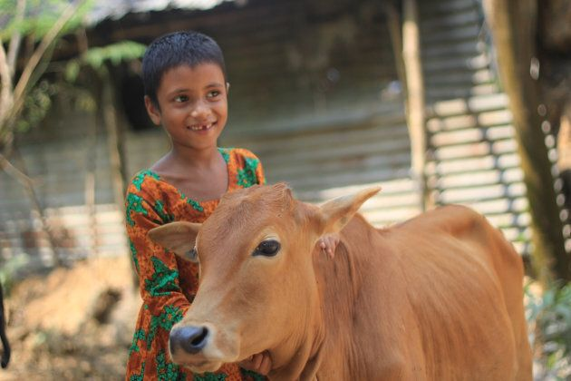 One cow can change a child's life, producing up to 20 cups full of protein-rich milk every day. This means yogurt, cheese and butter to sell at the market, paying for things like schooling and medicine. And one cow can produce a whole herd of calves in her lifetime!