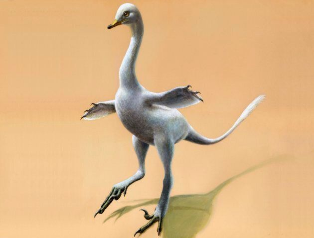 This illustration provided by Lukas Panzarin, with Andrea Cau for scientific supervision, shows a Halszkaraptor...