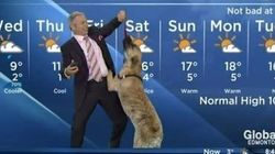 Dog Interrupts Local Weather Forecast With Hilarious