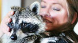 Saskatoon Pair Vies To Keep Their Pet