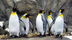 Calgary Zoo Moves Penguins Inside To Protect Them From Severe