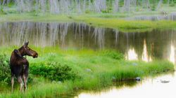 Alberta Wetlands In Serious