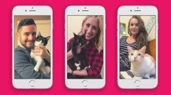Me-ow: Vancouver Kittens Use Tinder To Find New