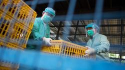 Canadian Is 1st In North America To Get H7N9 Bird