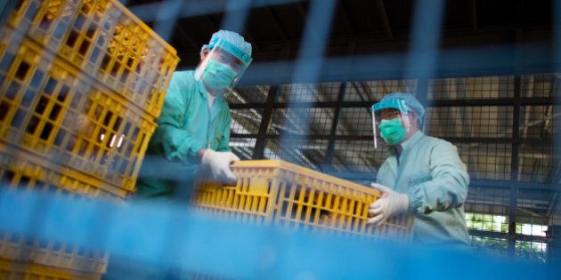 Officials with the Food and Environmental Hygiene Department carry a crate of live chickens to collect...