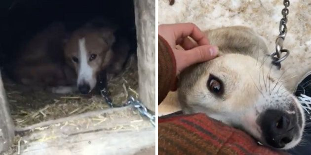 A screengrab from a Facebook video shows the living conditions of canines at a dog sledding operation...