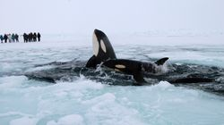 The Government Must Act Now To Keep Killer Whales